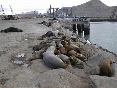 seals on the wharf
